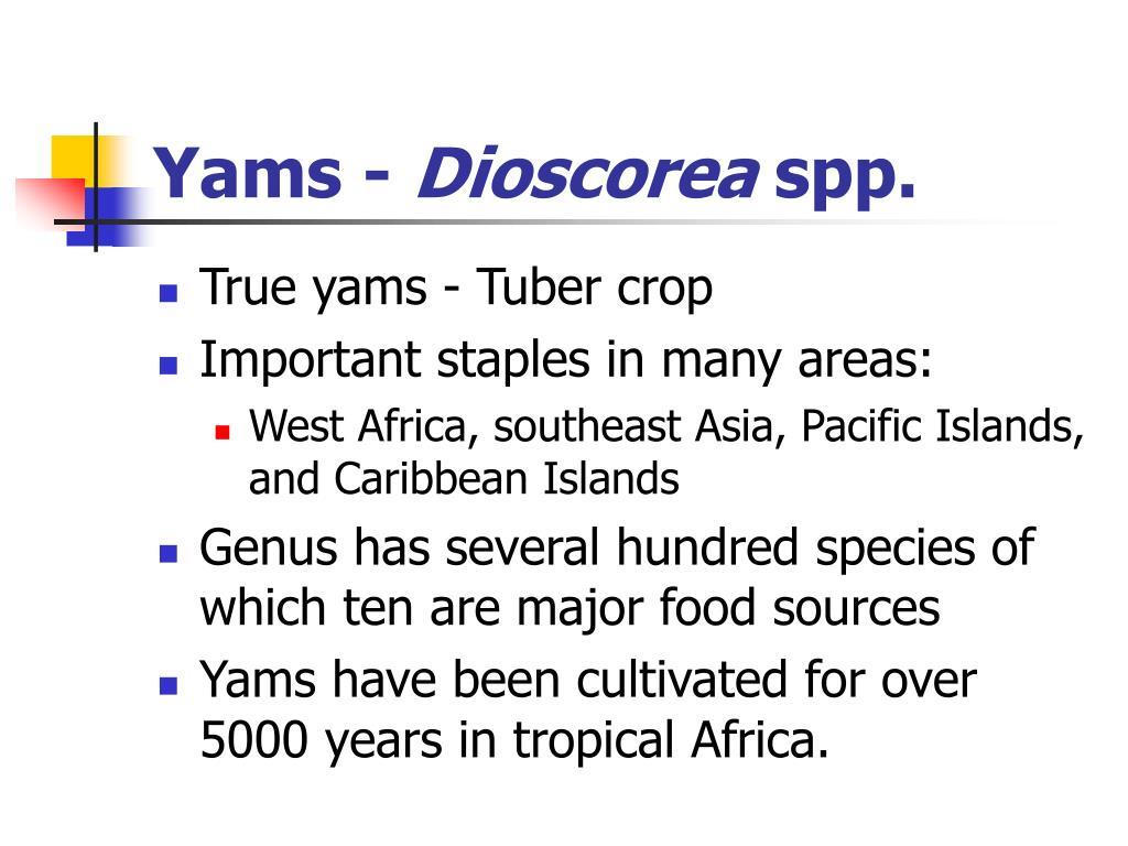 Yams -