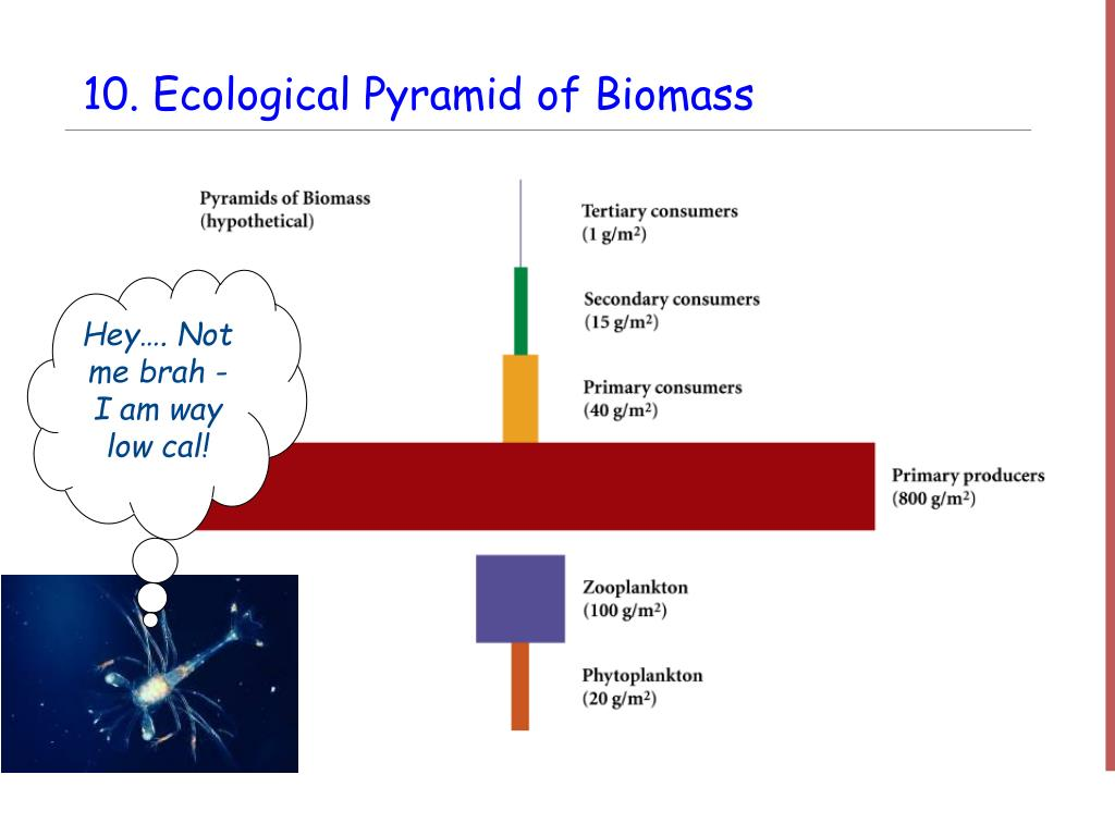 PPT - Interdependence of Life: Ecosystems PowerPoint ...