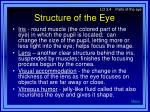 structure of the eye11