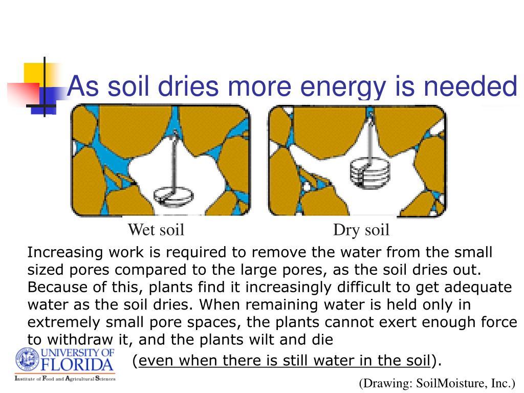 Wet soil                                  Dry soil