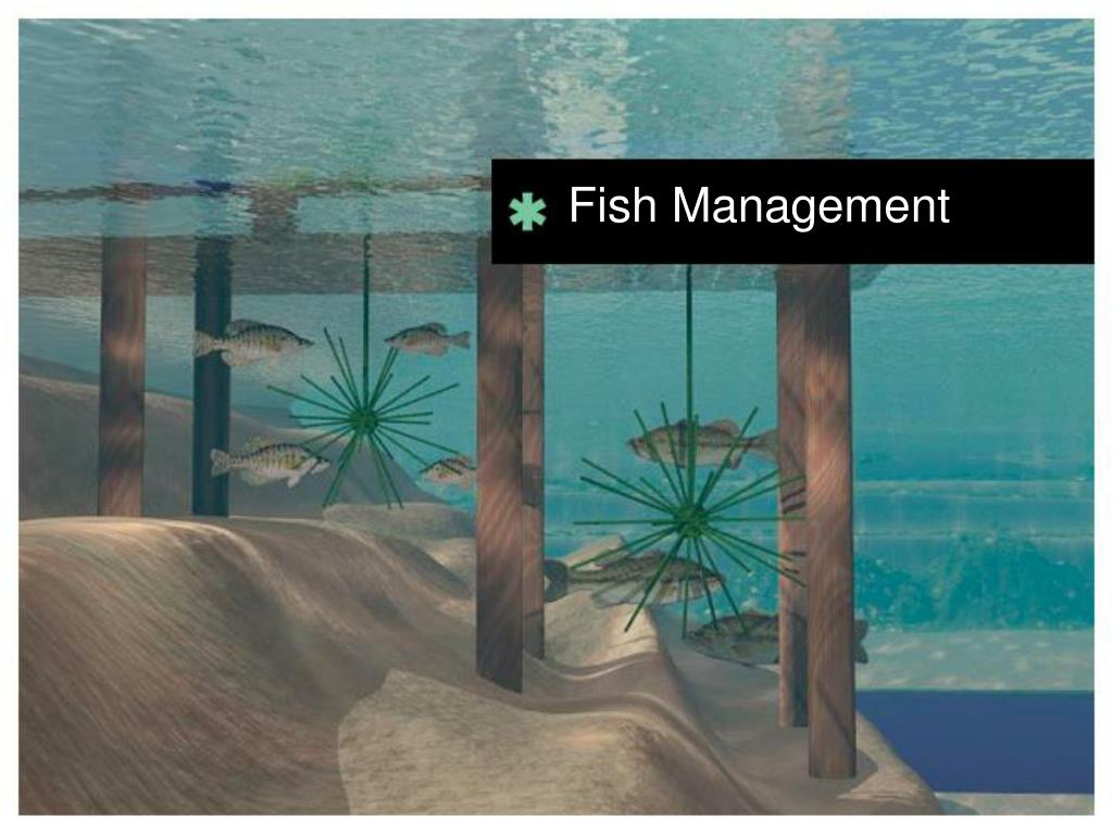 Fish Management