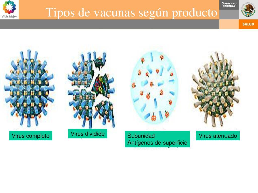 Tipos de vacunas según producto