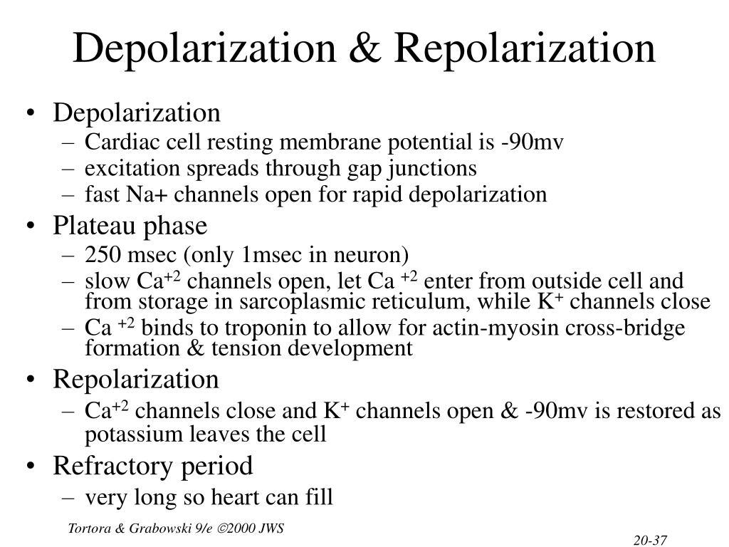 Depolarization & Repolarization