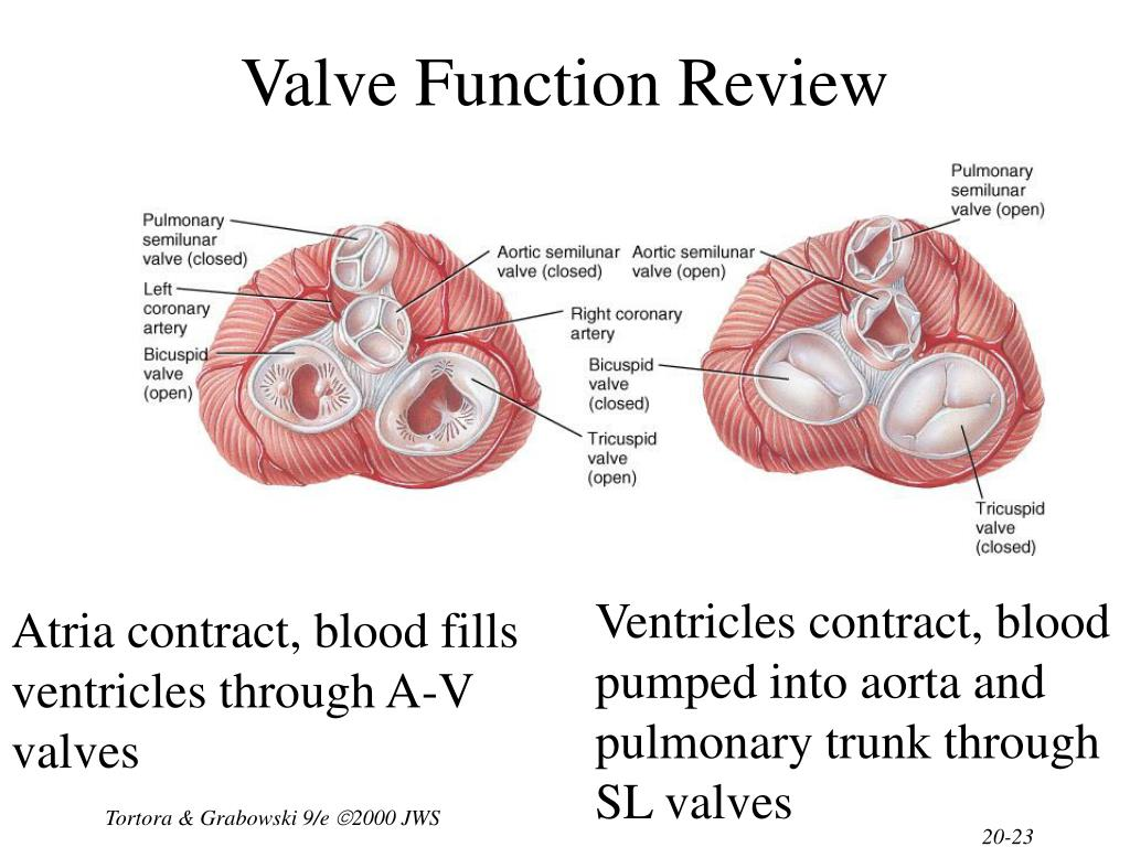 Valve Function Review