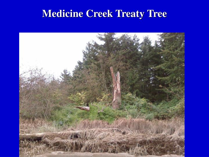 Medicine Creek Treaty Tree