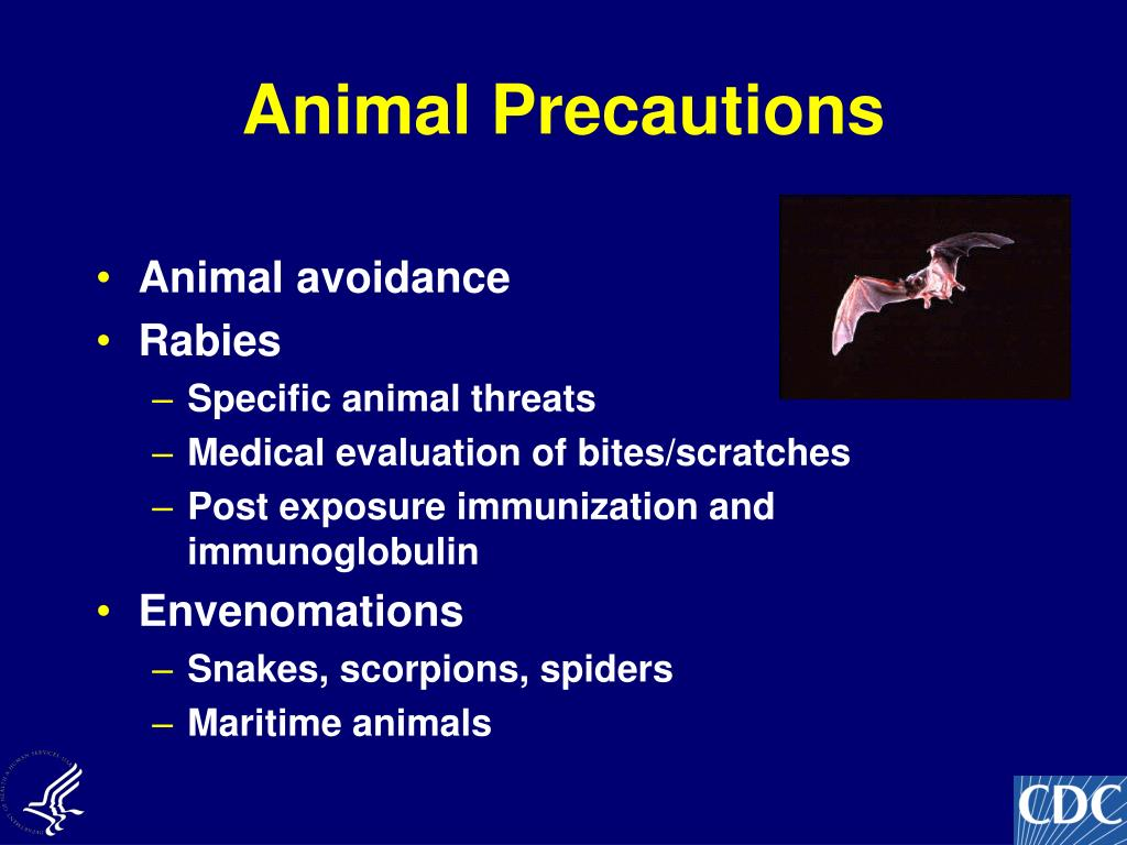 Animal Precautions