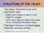 structure of the heart11