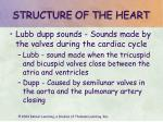 structure of the heart13
