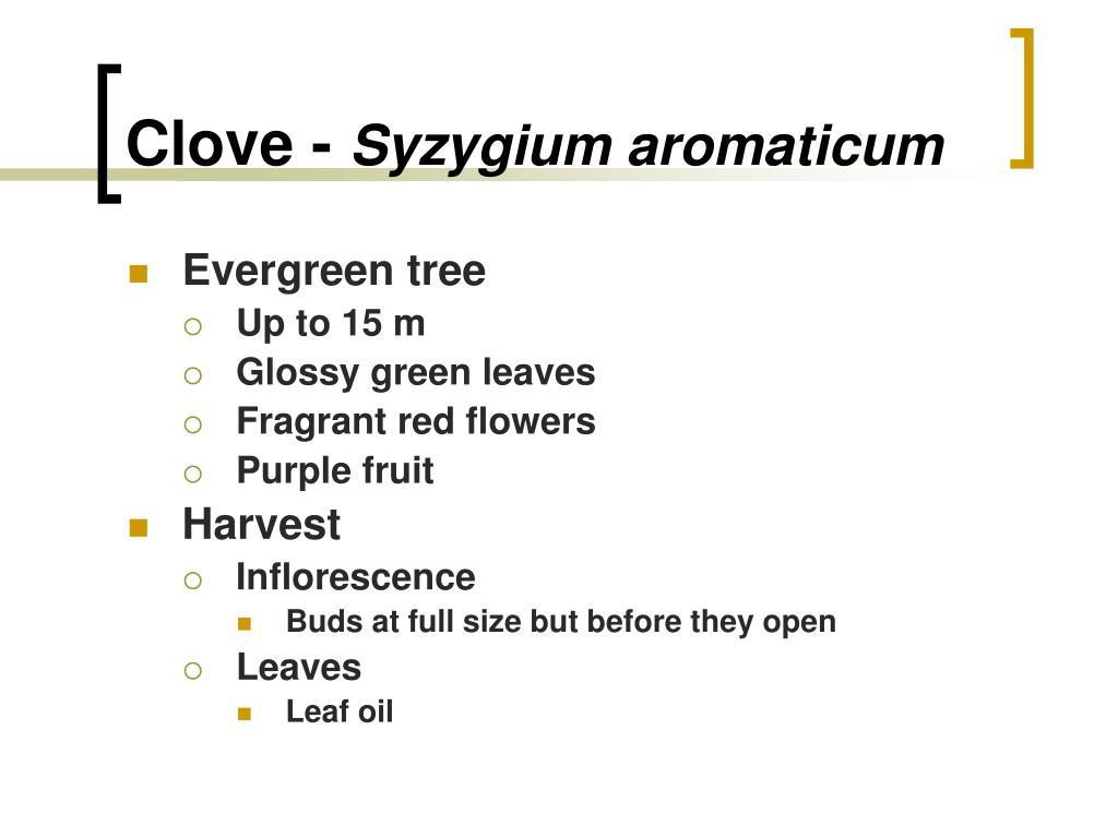Clove -