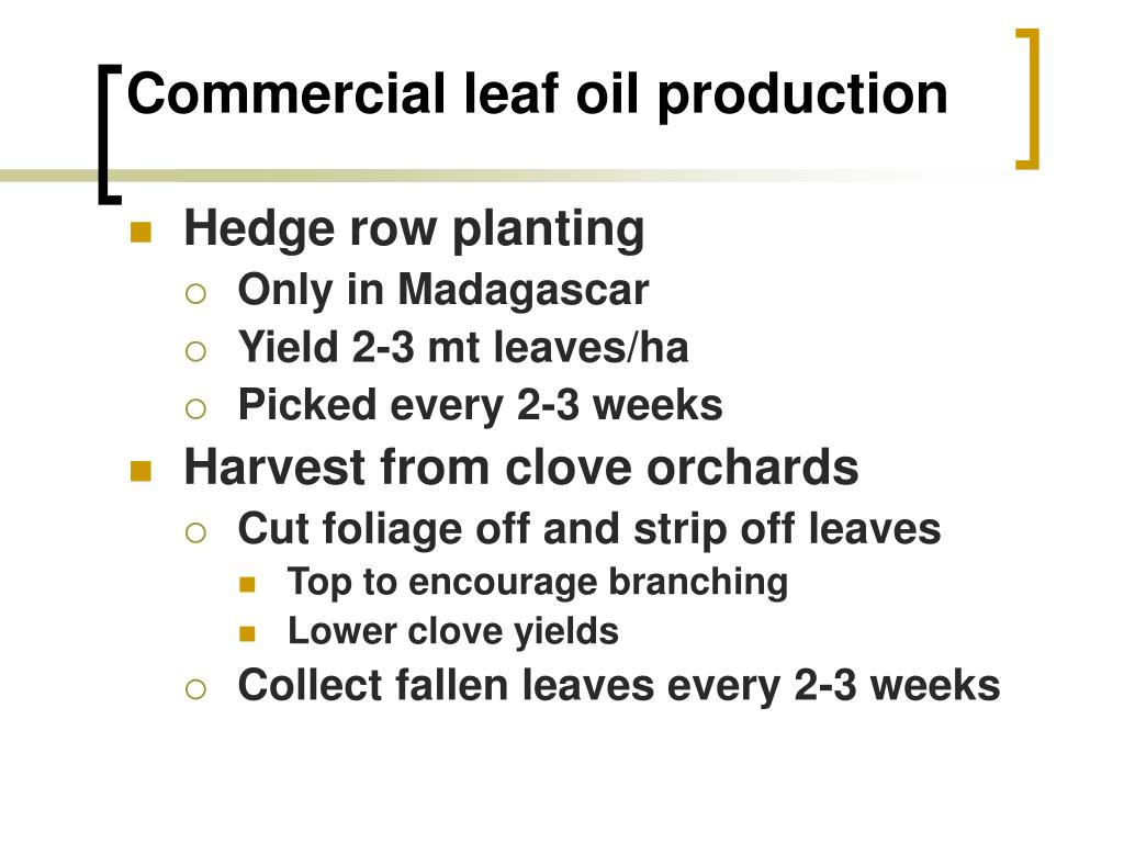 Commercial leaf oil production