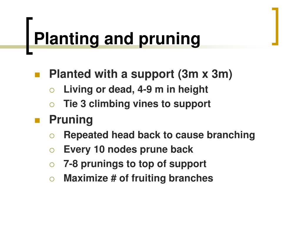 Planting and pruning