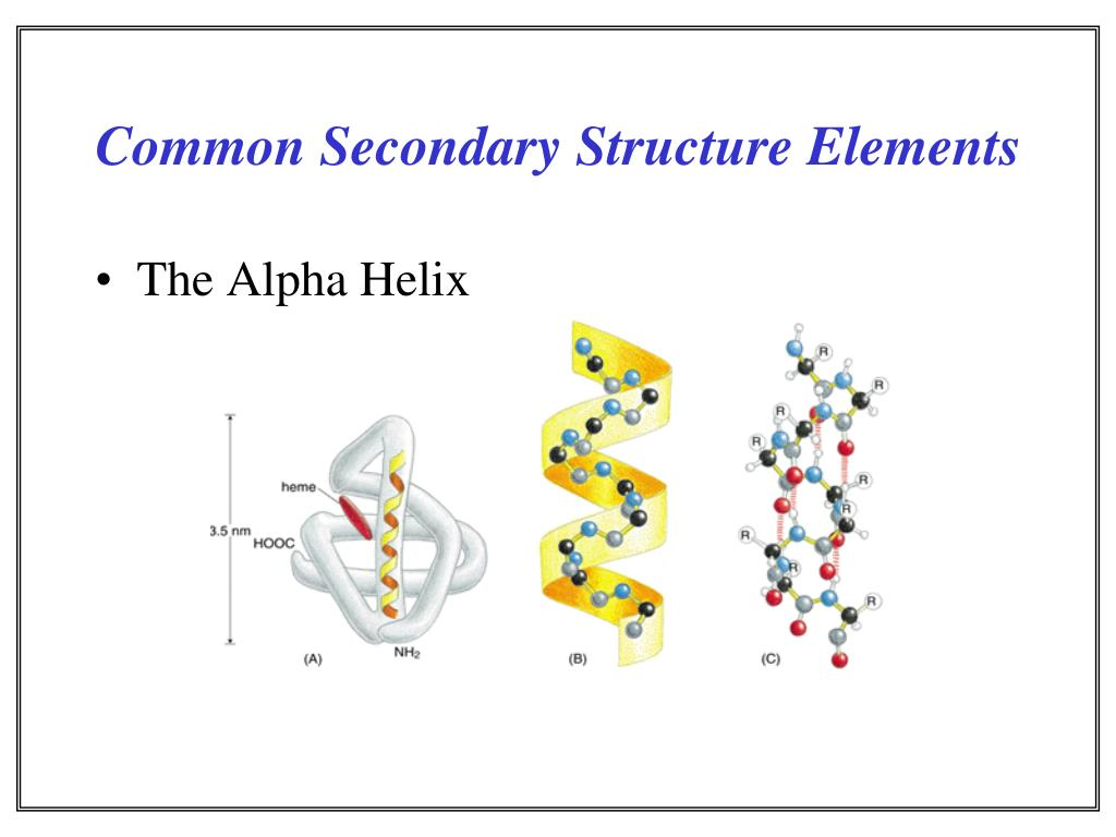 Common Secondary Structure Elements