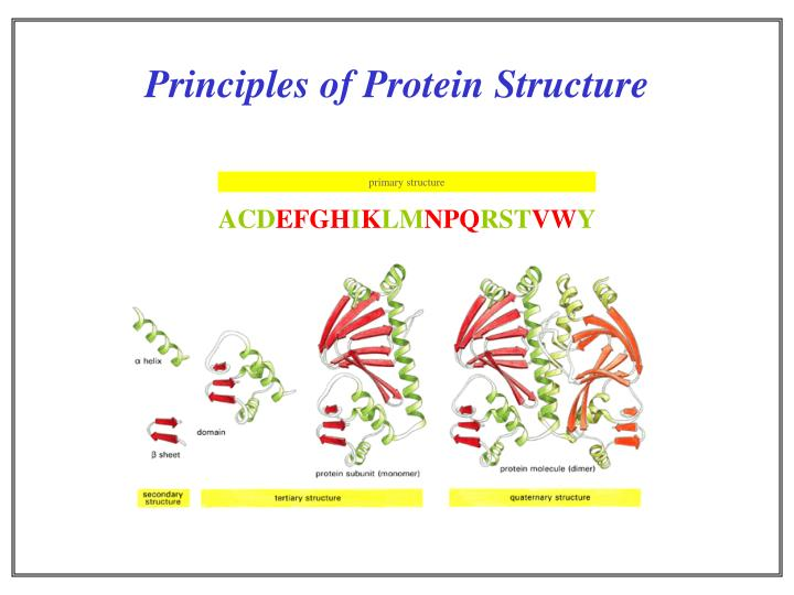Principles of protein structure l.jpg
