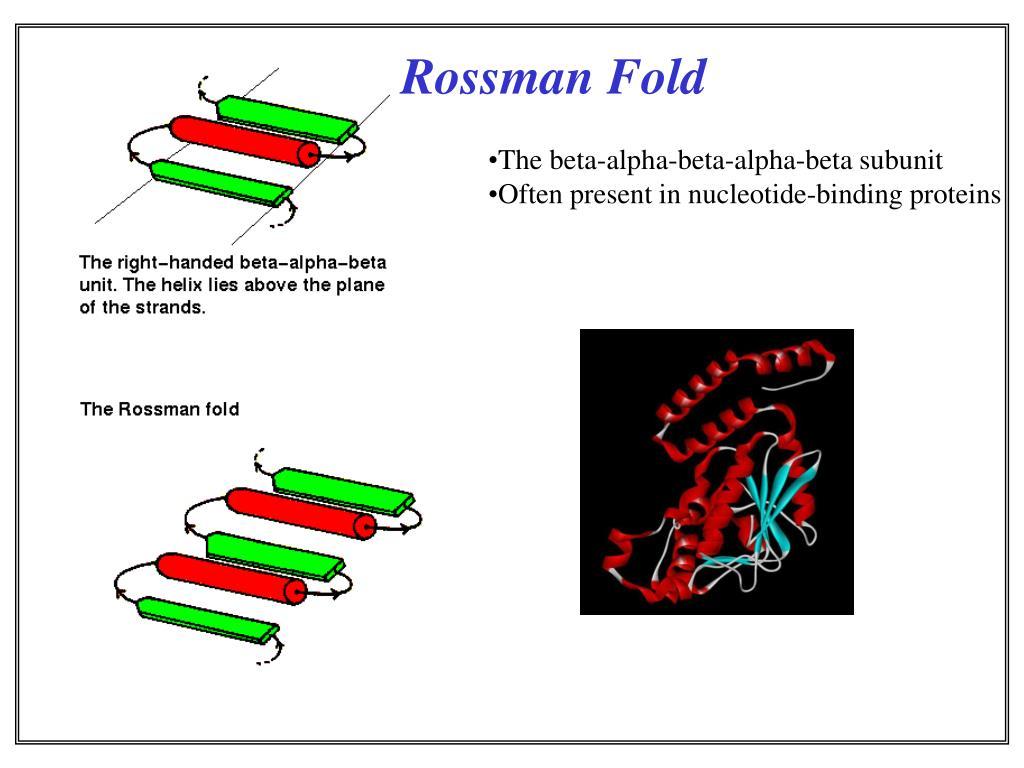 Rossman Fold