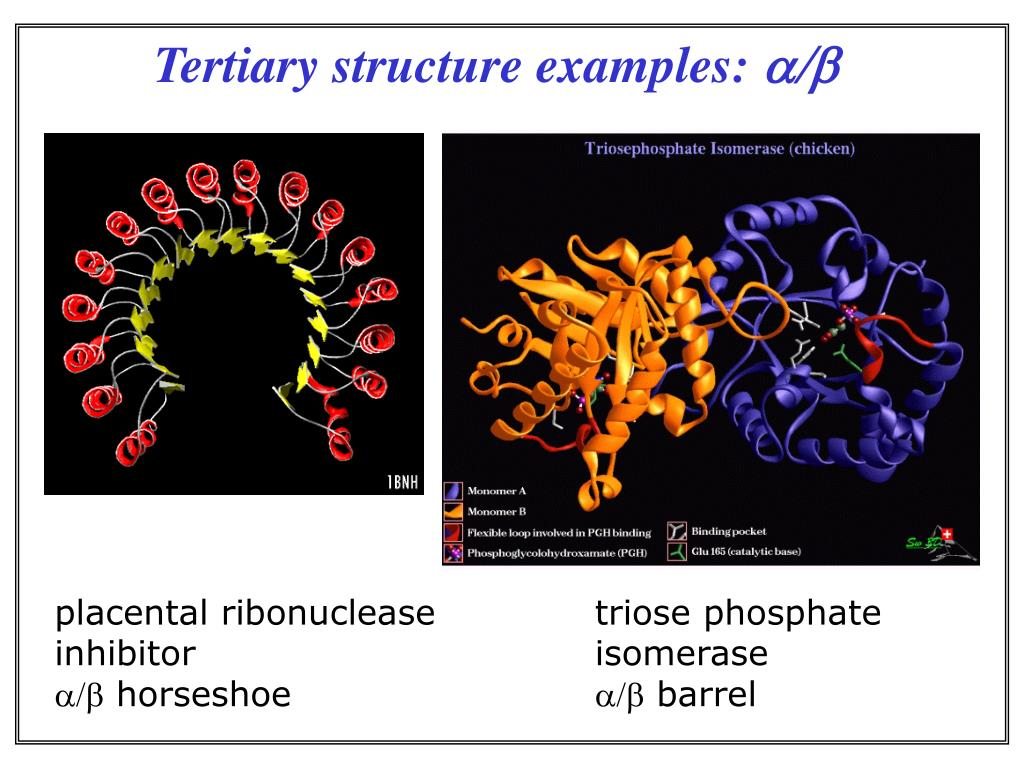 Tertiary structure examples: