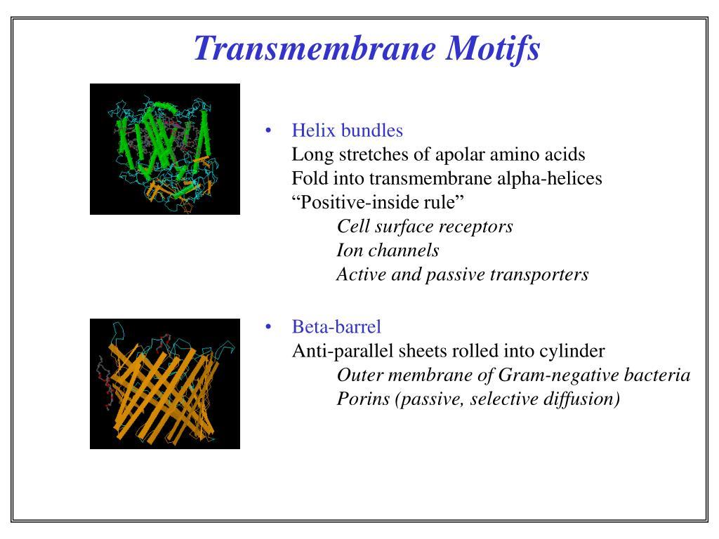 Transmembrane Motifs