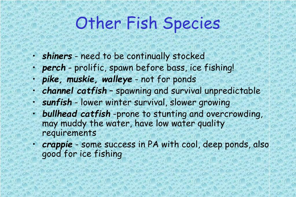 Other Fish Species
