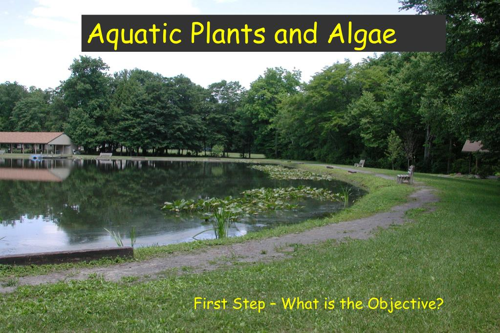 Aquatic Plants and Algae