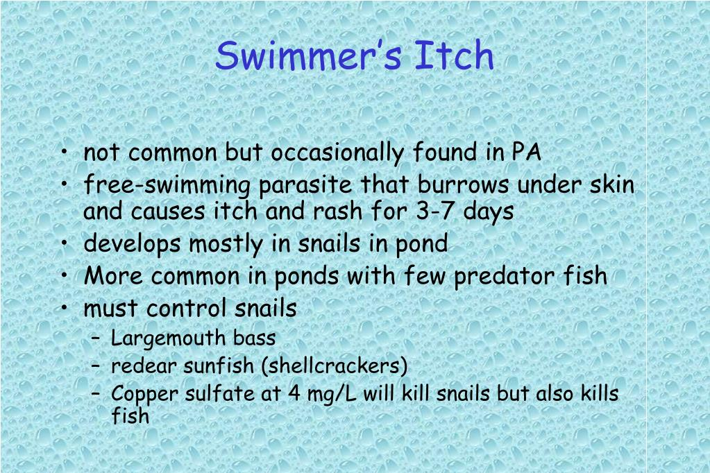 Swimmer's Itch