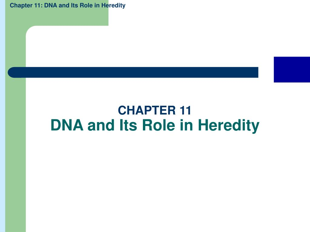 chapter 11 dna and its role in heredity