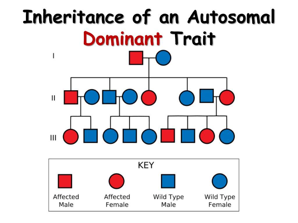 Inheritance of an