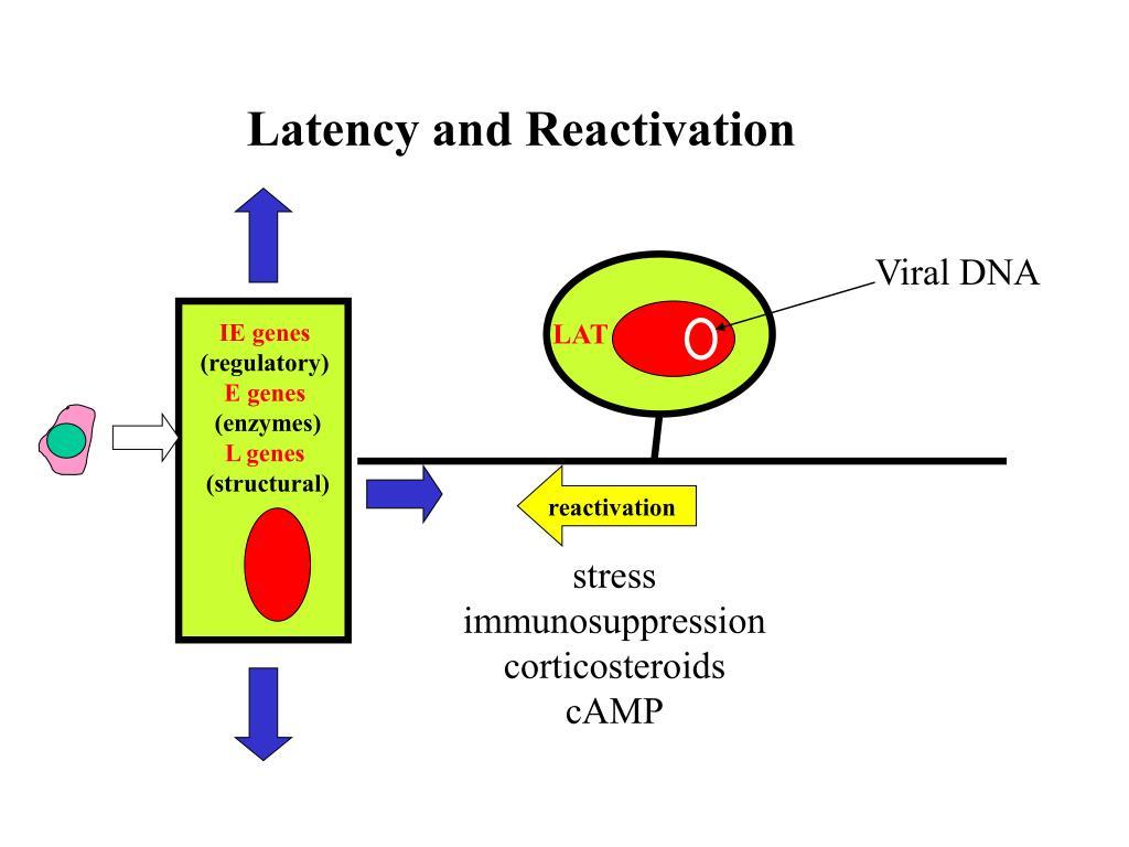 Neurological Complications of Herpes Simplex Virus Type 2