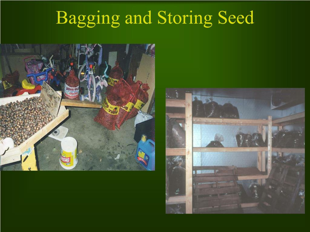 Bagging and Storing Seed