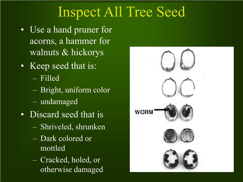 Inspect All Tree Seed