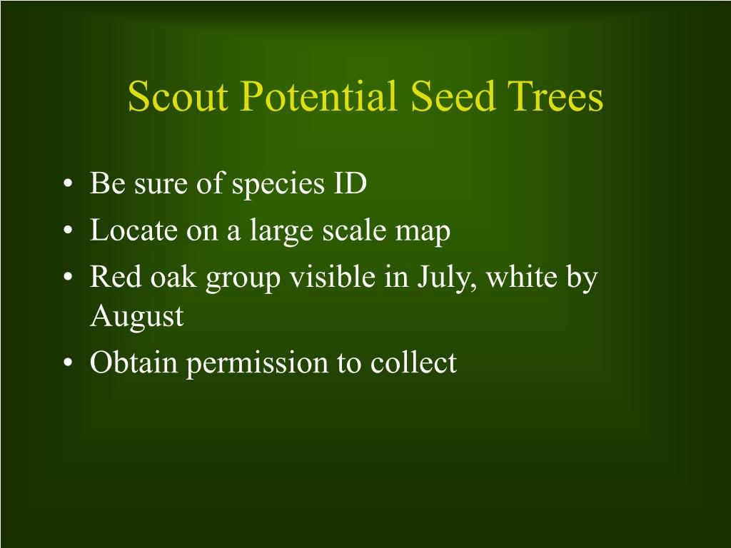 Scout Potential Seed Trees
