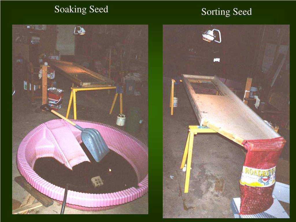 Soaking Seed