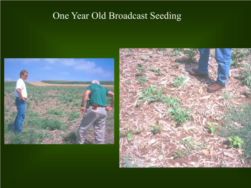 One Year Old Broadcast Seeding