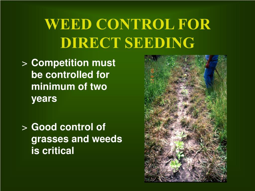 WEED CONTROL FOR DIRECT SEEDING