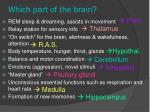 which part of the brain