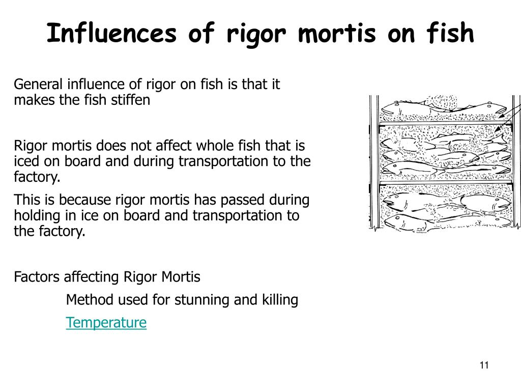 Influences of rigor mortis on fish