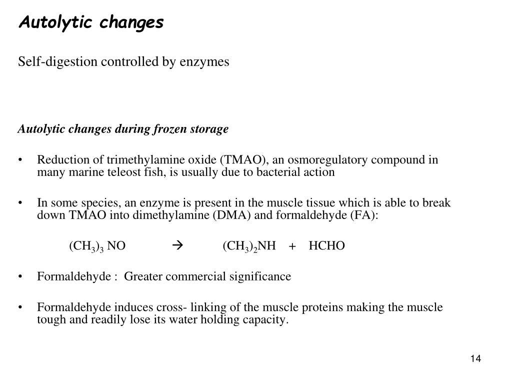 Autolytic changes