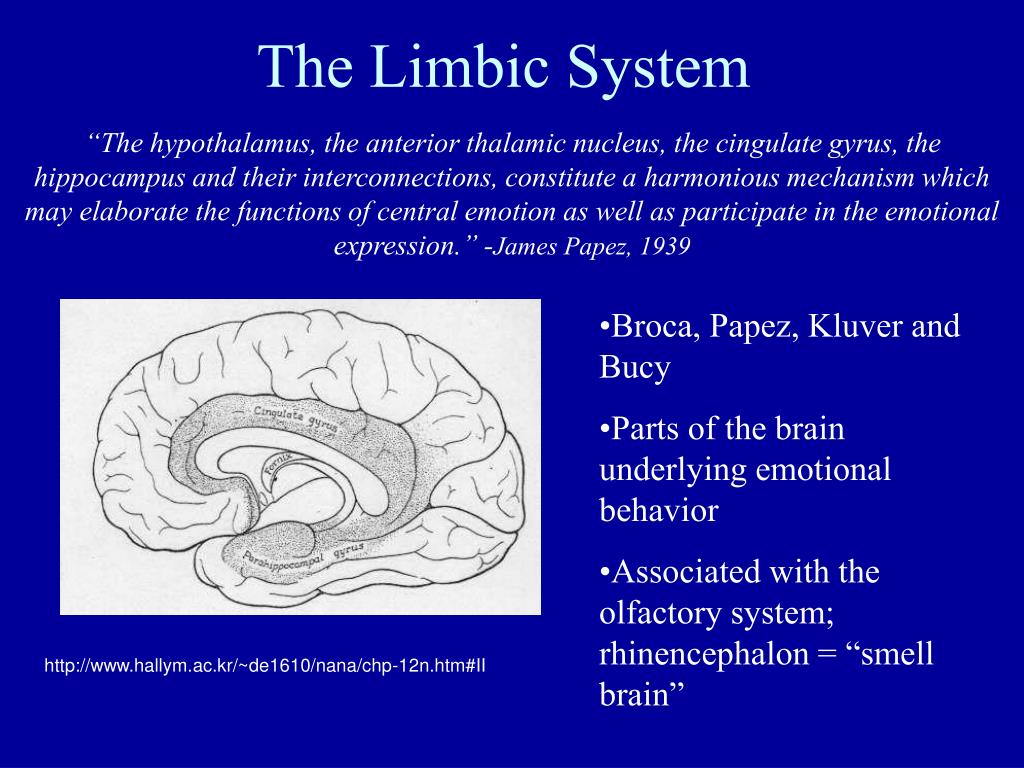 the limbic system The limbic system of the brain is a network of tissues that influence emotions and behavior the limbic system, and in particular the hippocampus and amygdala, is.
