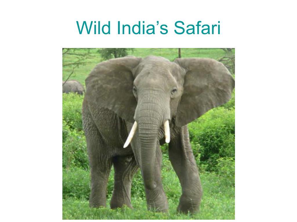 Wild India's Safari