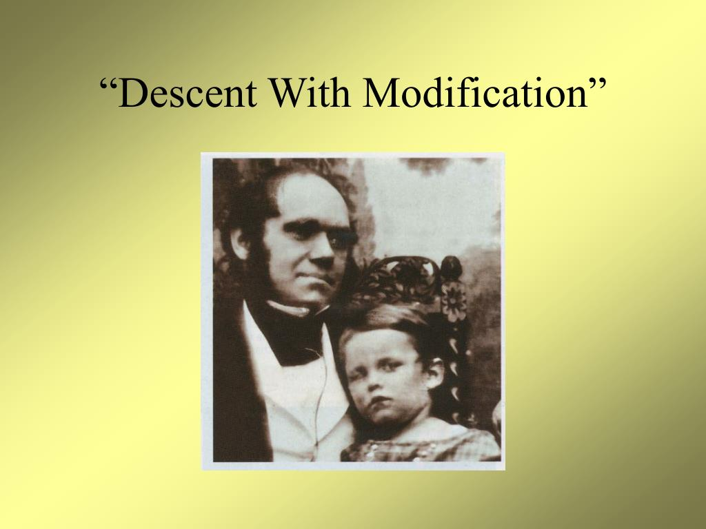 """""""Descent With Modification"""""""