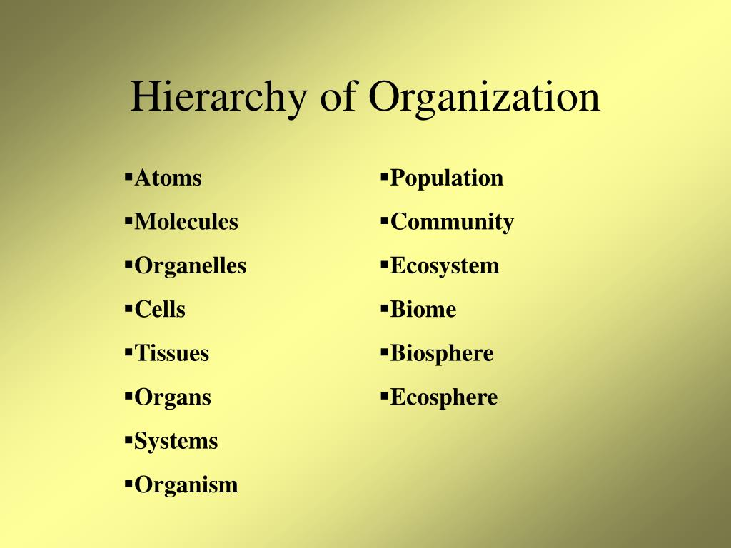 Hierarchy of Organization