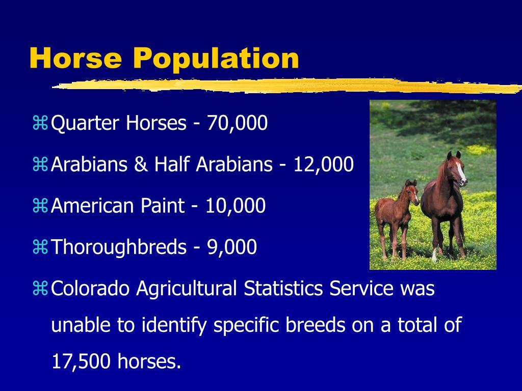 Horse Population