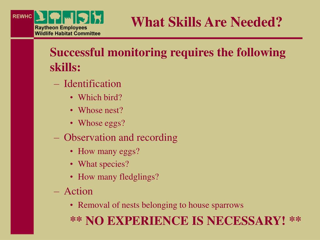 What Skills Are Needed?