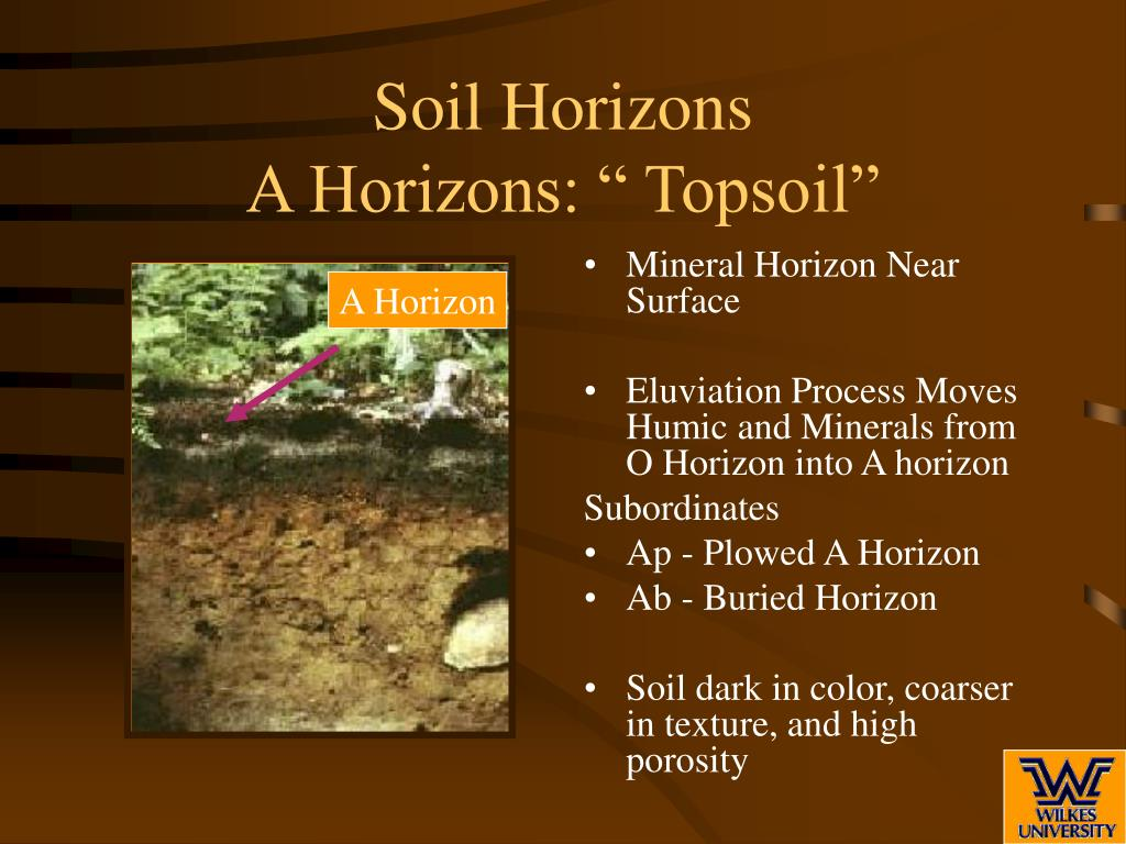 Ppt soil profile and soil horizons powerpoint for Soil horizons