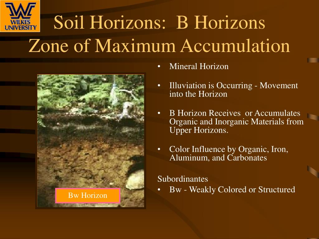 ppt soil profile and soil horizons powerpoint