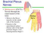 brachial plexus nerves2