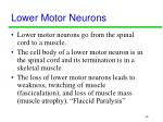 lower motor neurons