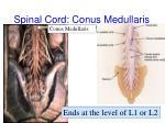 spinal cord conus medullaris