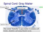 spinal cord gray matter