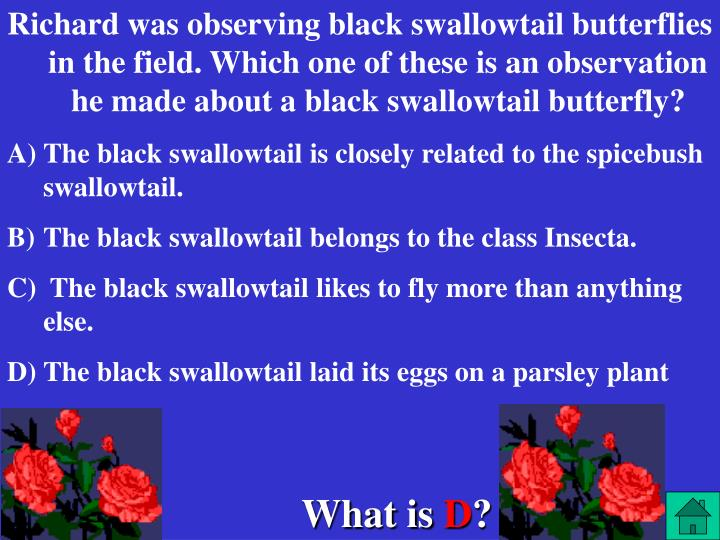 Richard was observing black swallowtail butterflies in the field. Which one of these is an observation he made about a black swallowtail butterfly?