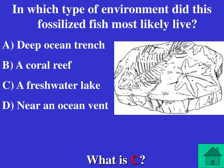 In which type of environment did this fossilized fish most likely live?