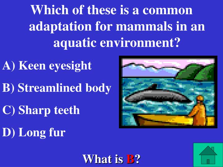 Which of these is a common adaptation for mammals in an aquatic environment?